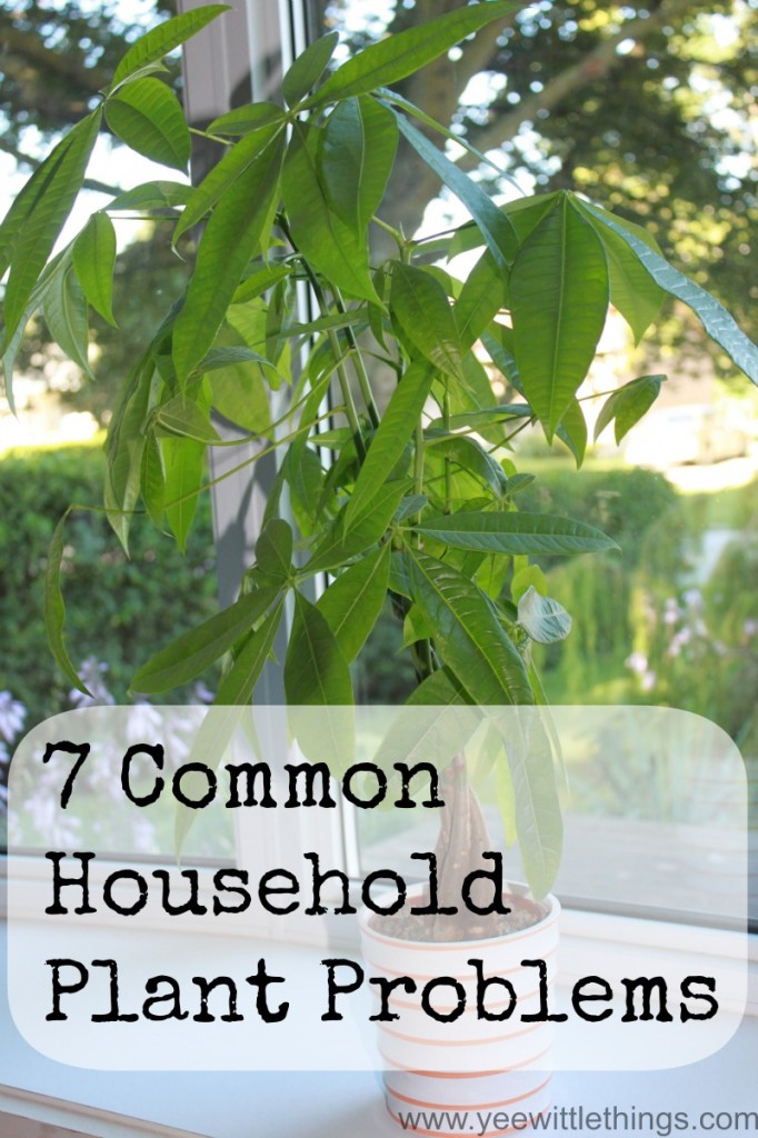 7 common household plant problems yee wittle things - Common house plants names ...